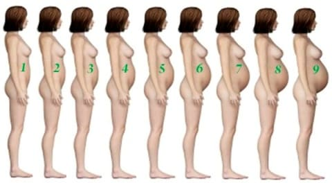 Живот при беременности по месяцам фото