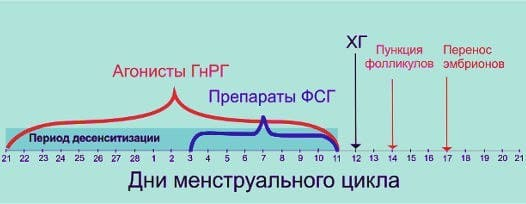 Длинный протокол ЭКО