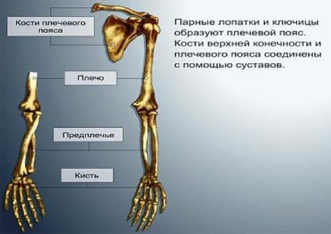 Перелом сустава руки овес как средство для связок и суставов малахов